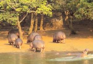 Zookeeper-Zoo