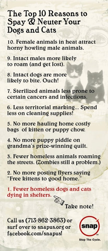 Top 10 Reasons to Spay & Neuter